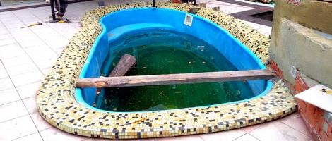Пруд-бассейн для дачи своими руками